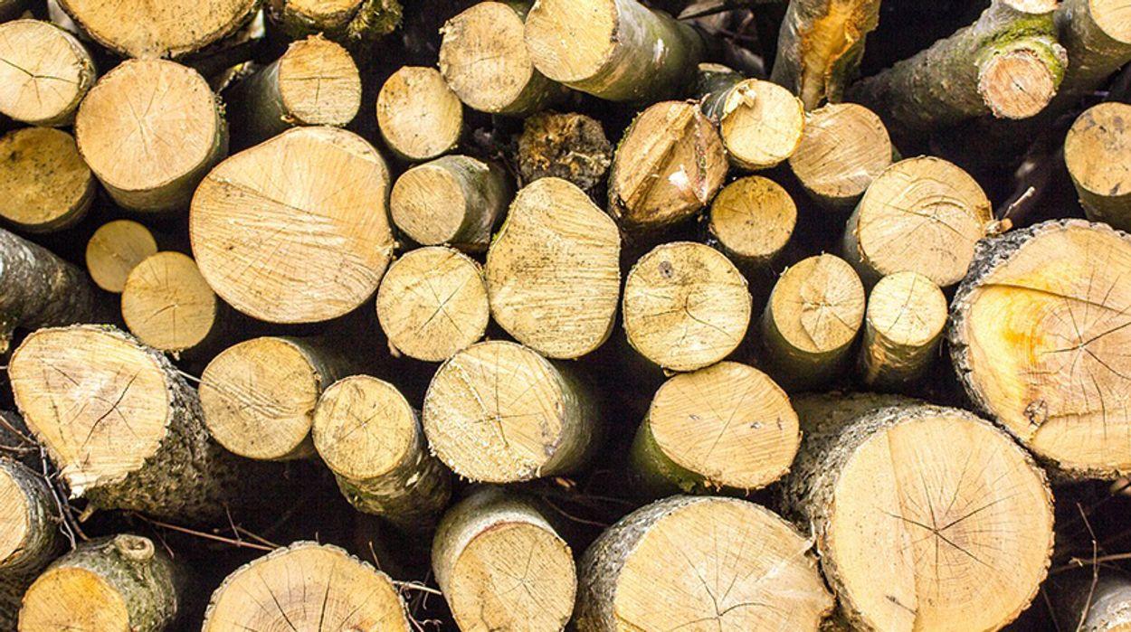 Afbeelding van Natuurmonumenten gaat minder bomen kappen