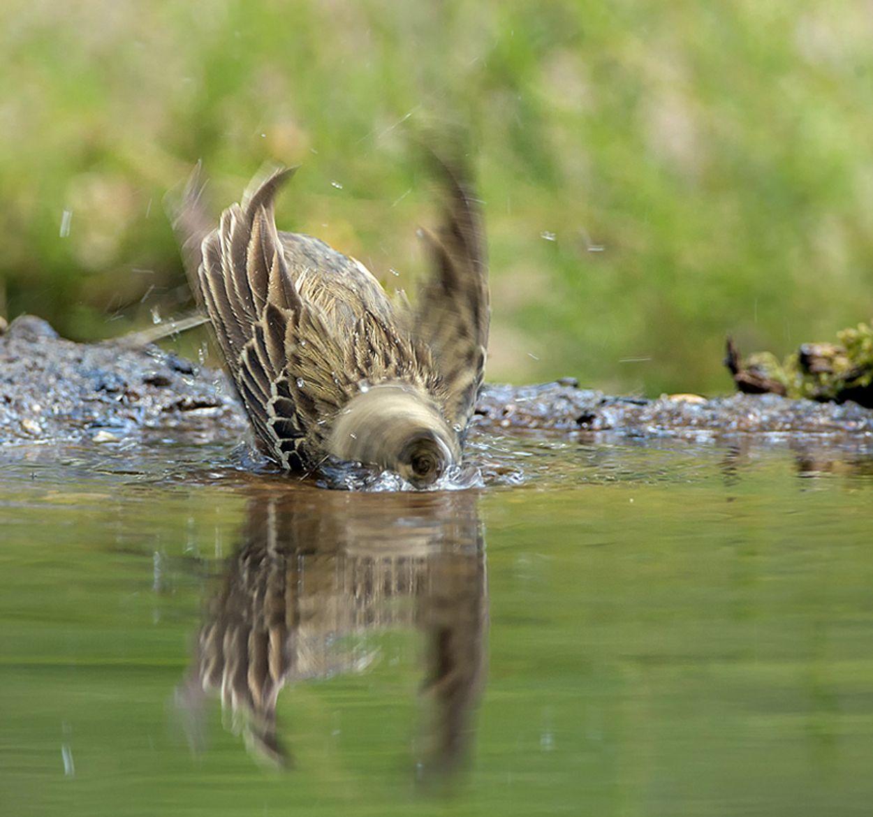 Afbeelding van Tip: geef plant en dier water