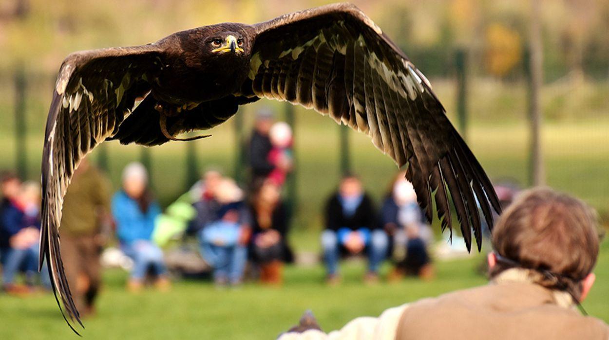 Afbeelding van Petitie: stop de handel in roofvogels