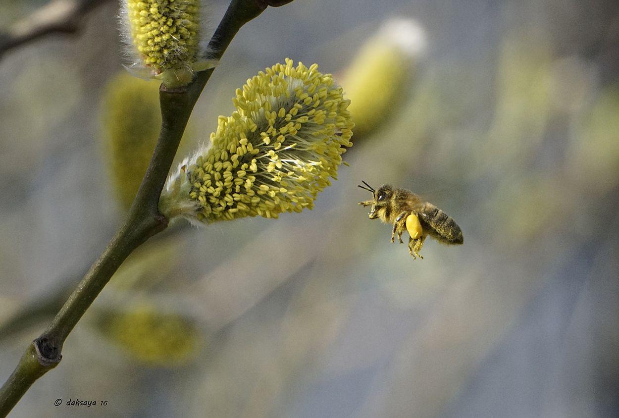 Afbeelding van Hoop op verbod bijengif neemt toe