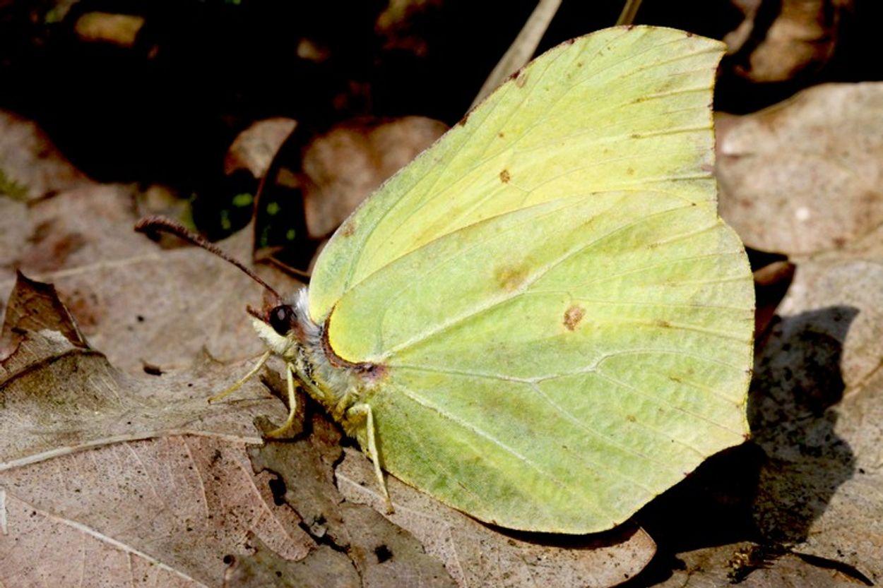 Afbeelding van Tip: vuilboom voor vlinders