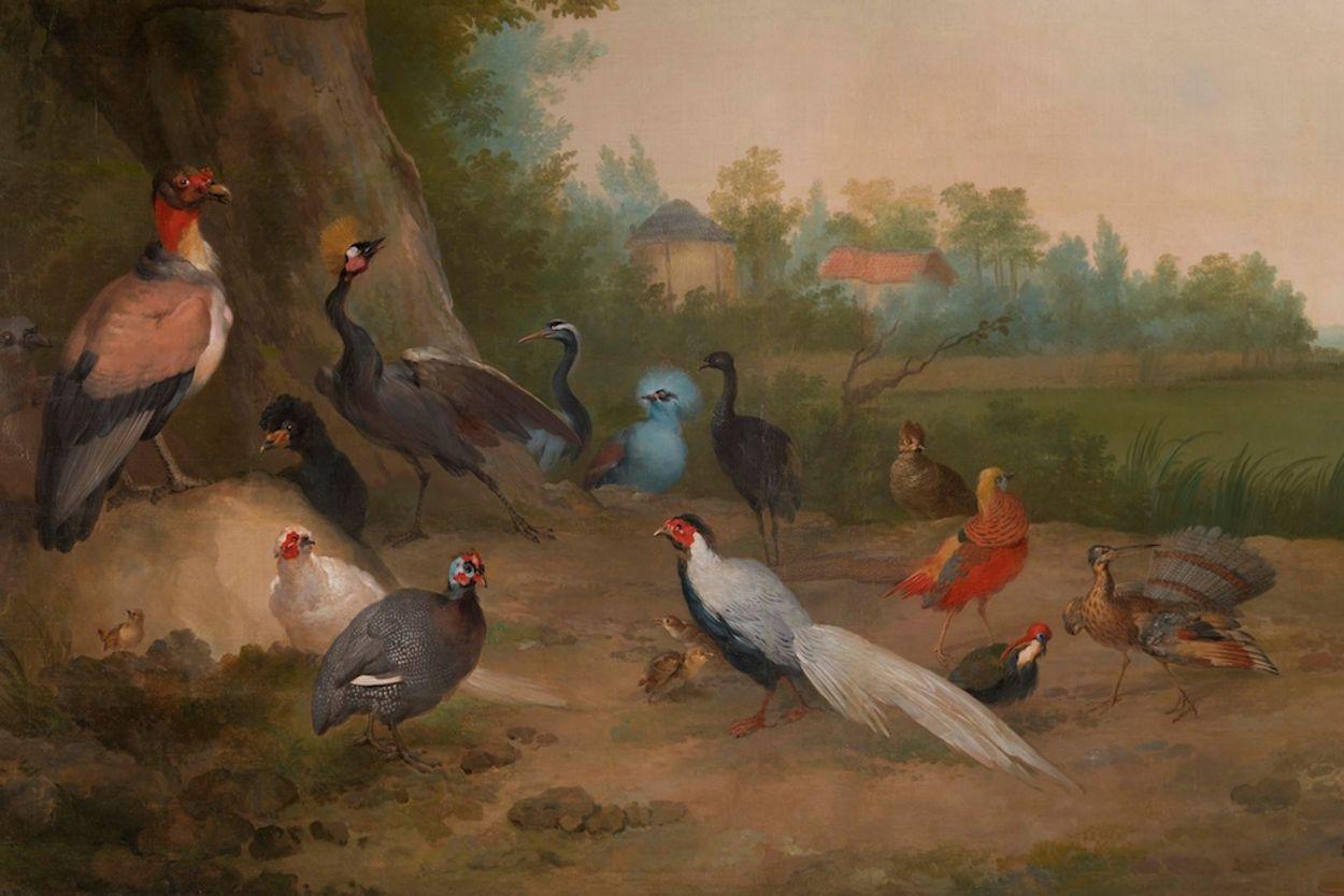 Afbeelding van Vogelbehang uit paleis trekt veel bezoekers