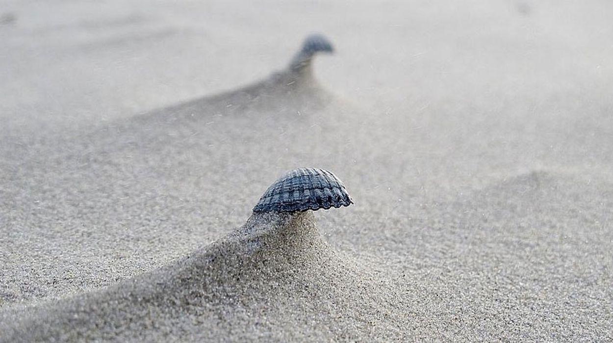 Afbeelding van Wat vind je op het strand?