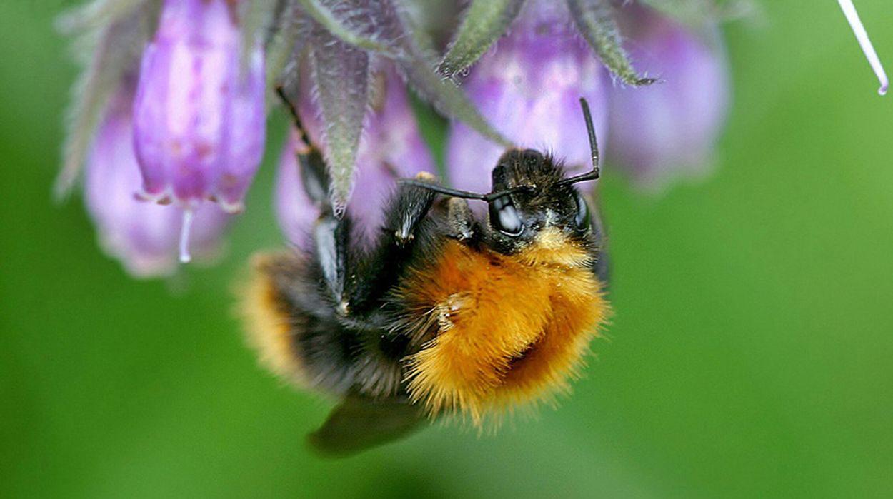 Afbeelding van Nederland voor Europees verbod op bijengif