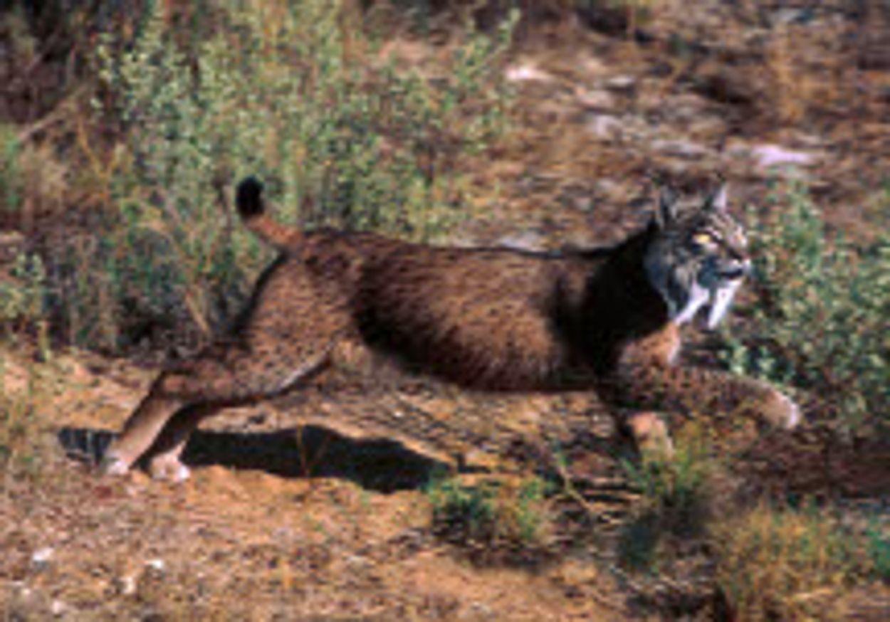 Afbeelding van Rode Lijst IUCN toont aan dat natuurbescherming cruciaal is