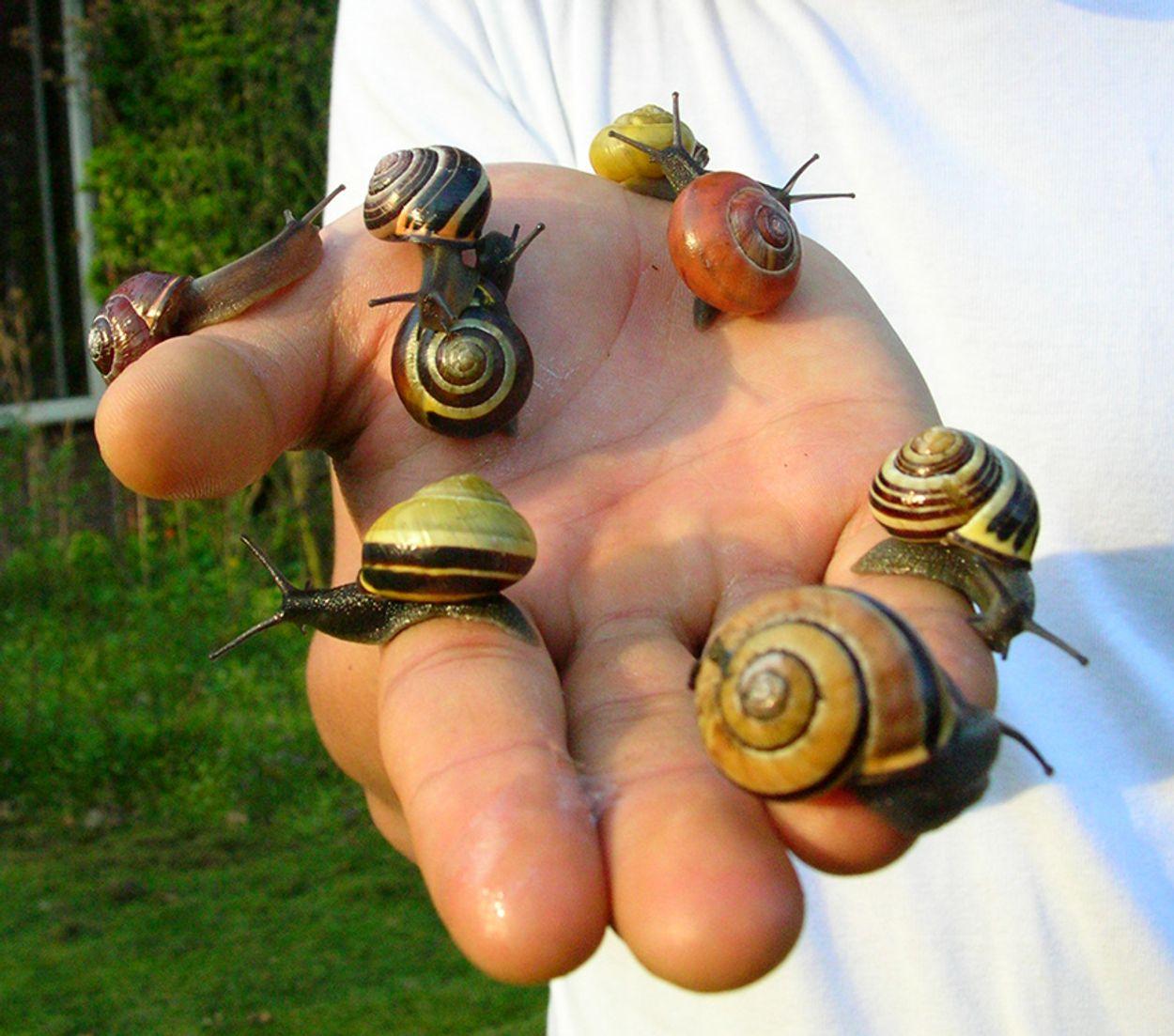 Slakken op hand