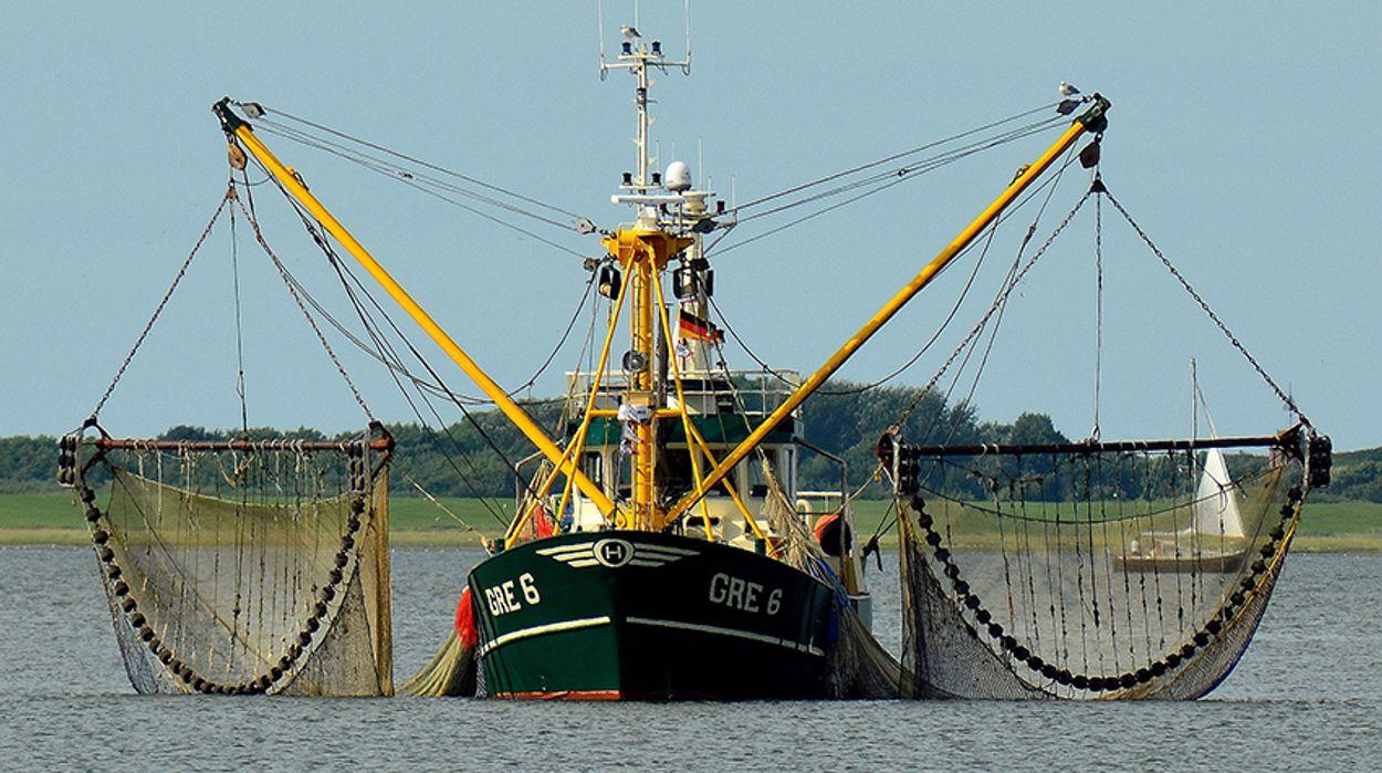 Afbeelding van Akkoord over minder visvangst in IJsselmeer