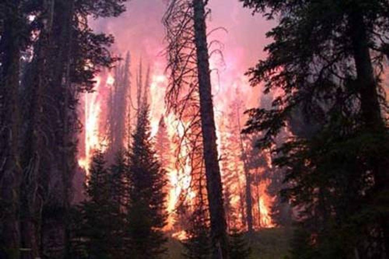 Afbeelding van Bosbranden in Zuid-Europa