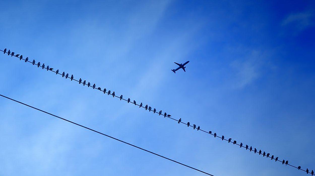 Afbeelding van Bouw Lelystad Airport gaat door ondanks missende natuurvergunning