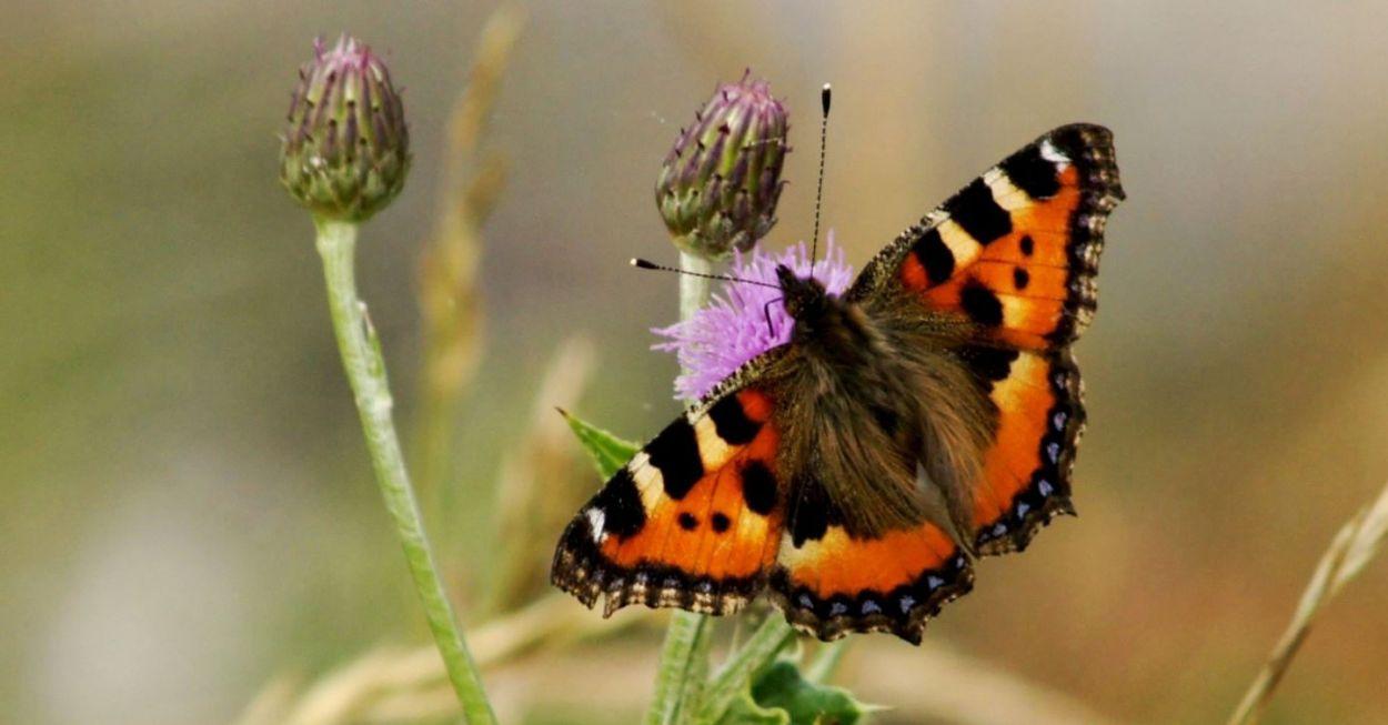 Afbeelding van Zoek de juiste rups bij de vlinder