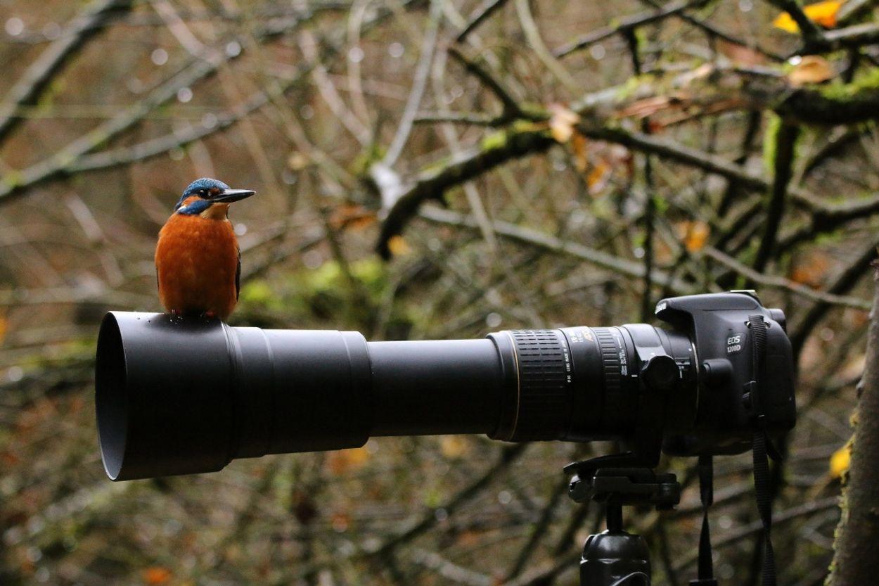 Afbeelding van Gezocht: natuurfilmpjes uit natuurgebieden
