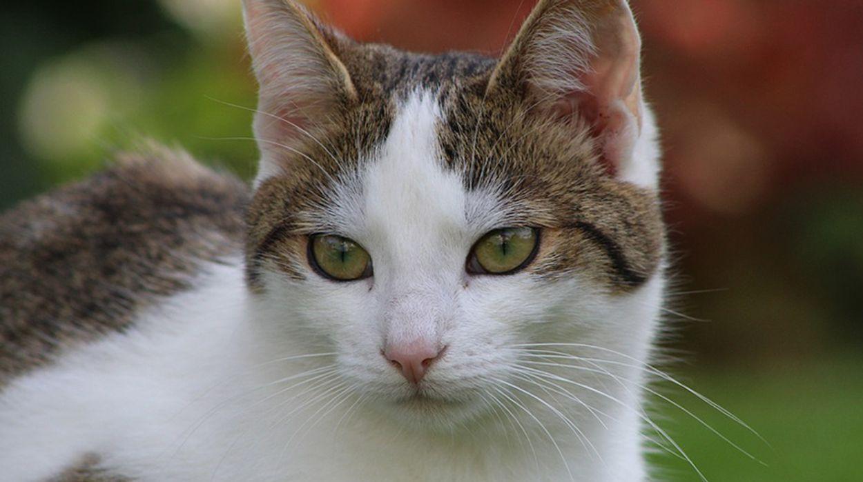 Afbeelding van Meer katten en honden gebruikt als proefdier