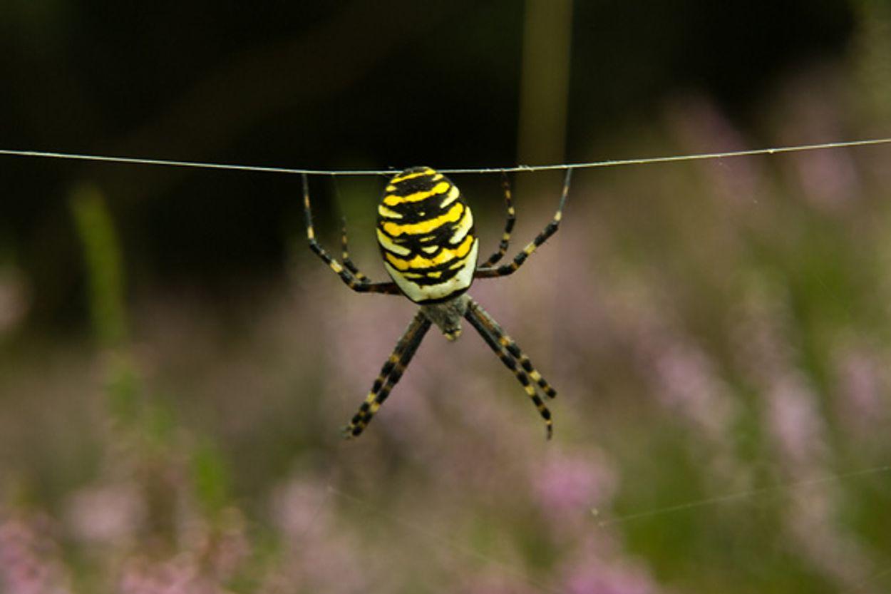 Afbeelding van Spinnen en insecten