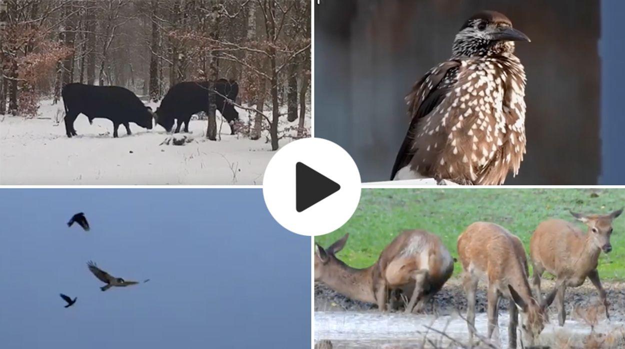 Afbeelding van Top 10 Zelf Geschoten filmpjes - winter 2018/2019