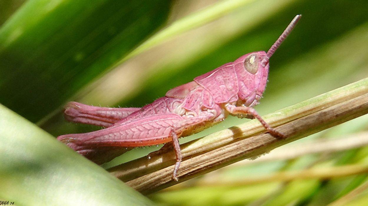Afbeelding van Roze dieren