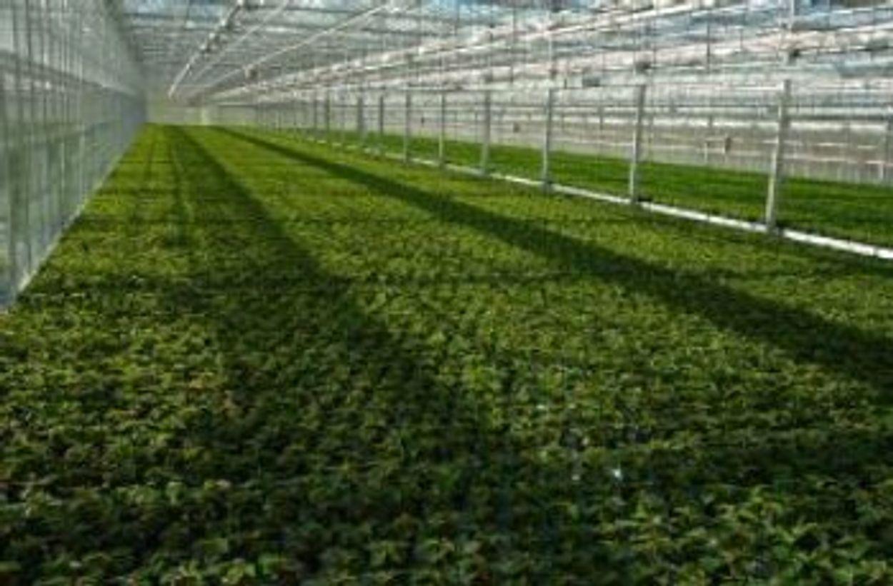 Afbeelding van Kasgroenten uit Nederland: goed voor het klimaat