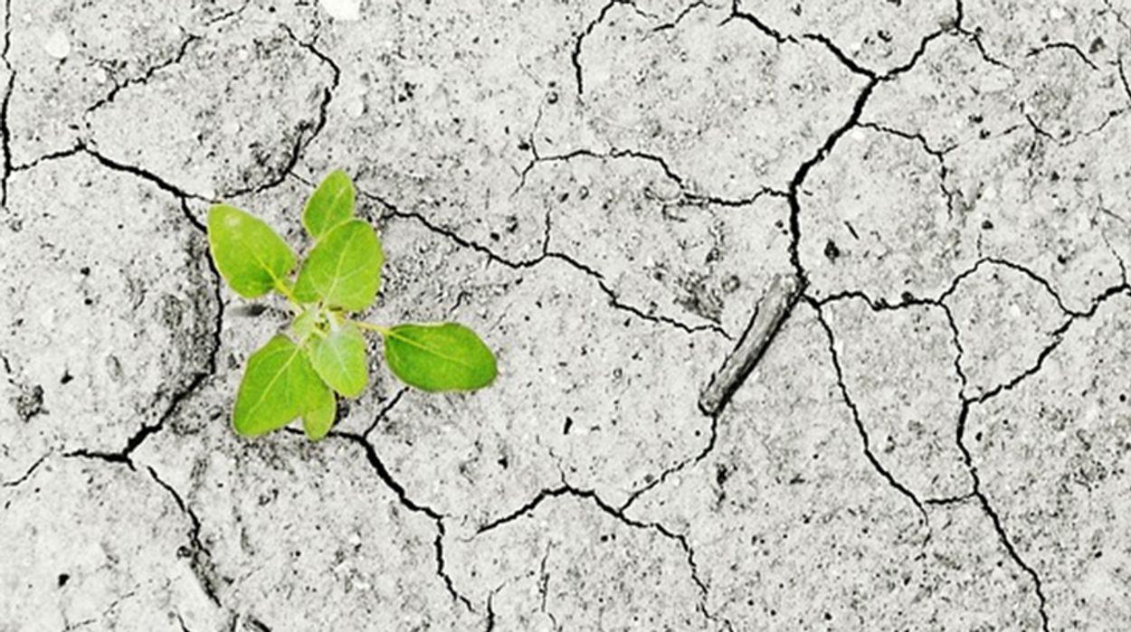 Afbeelding van Brabantse Milieufederatie wint tussenuitspraak om grondwaterwinning