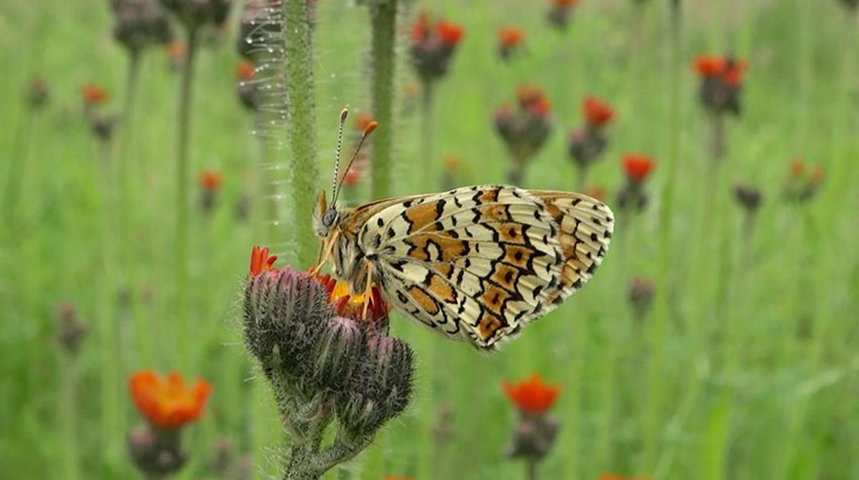 Afbeelding van Natura 2000-netwerk belangrijk voor veel Europese soorten