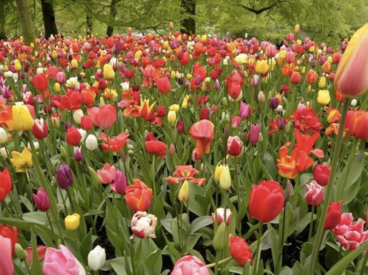 Afbeelding van Tip: Breng kleur in je tuin