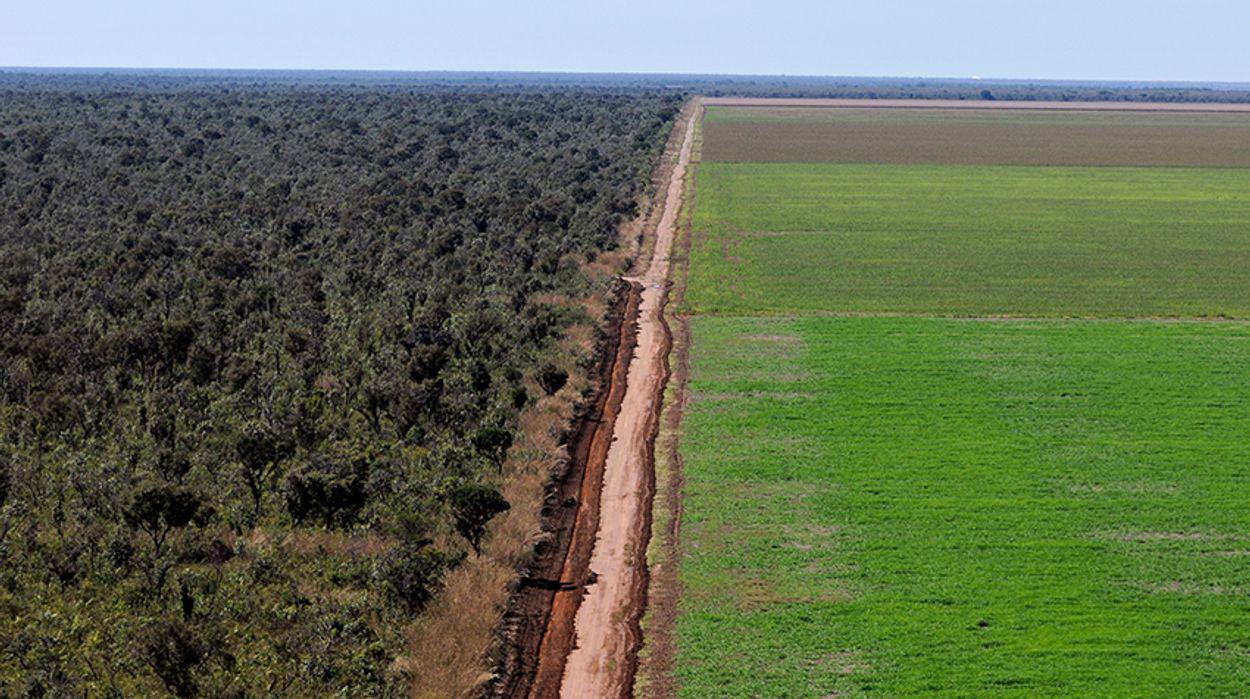 Bos-in-Cerrado-is-vernietigd-door-monoteelt-van-soja.-_-Adriano-Gambarini--WWF-Brazil
