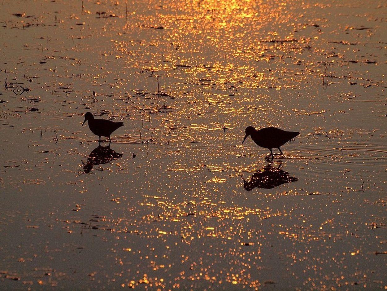 Afbeelding van Kustvogels krijgen nieuwe kansen in de Delta
