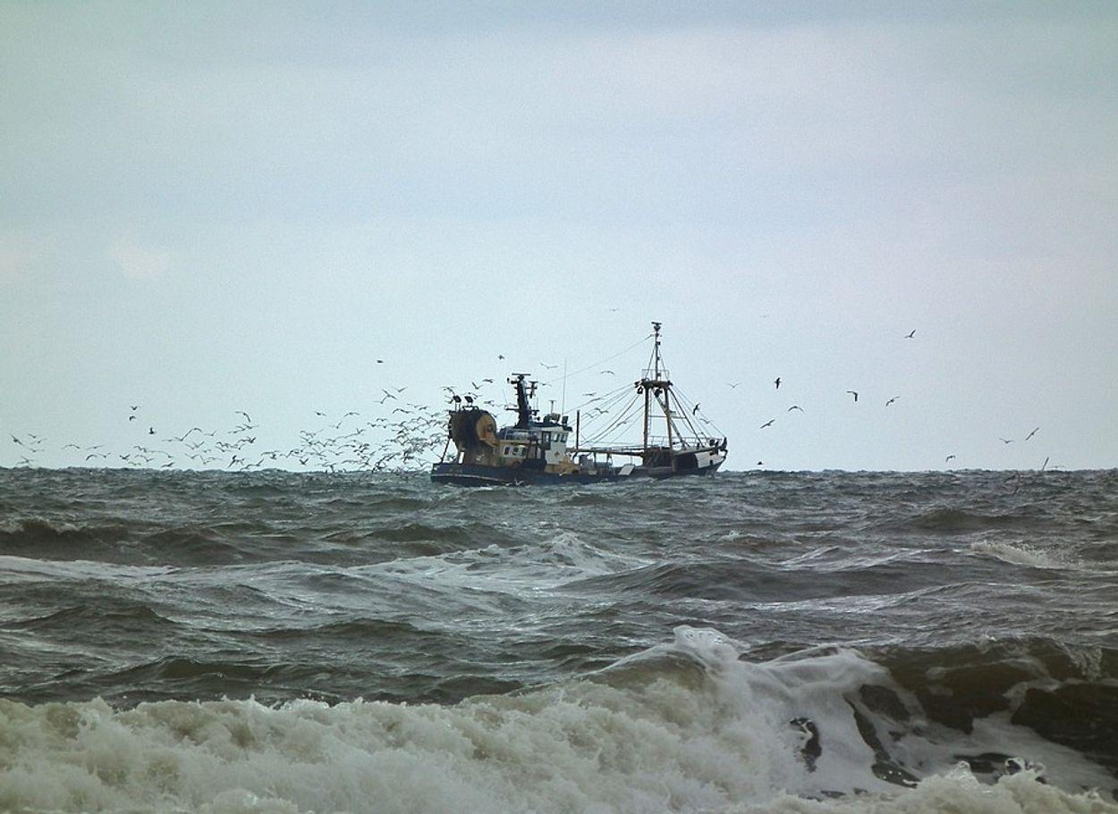 Afbeelding van Akkoord voor betere bescherming natuur Noordzeekust