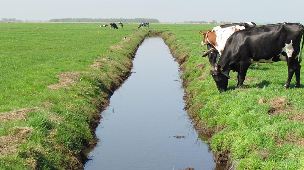 Afbeelding van Miljoenen extra voor natuurbeheer boeren
