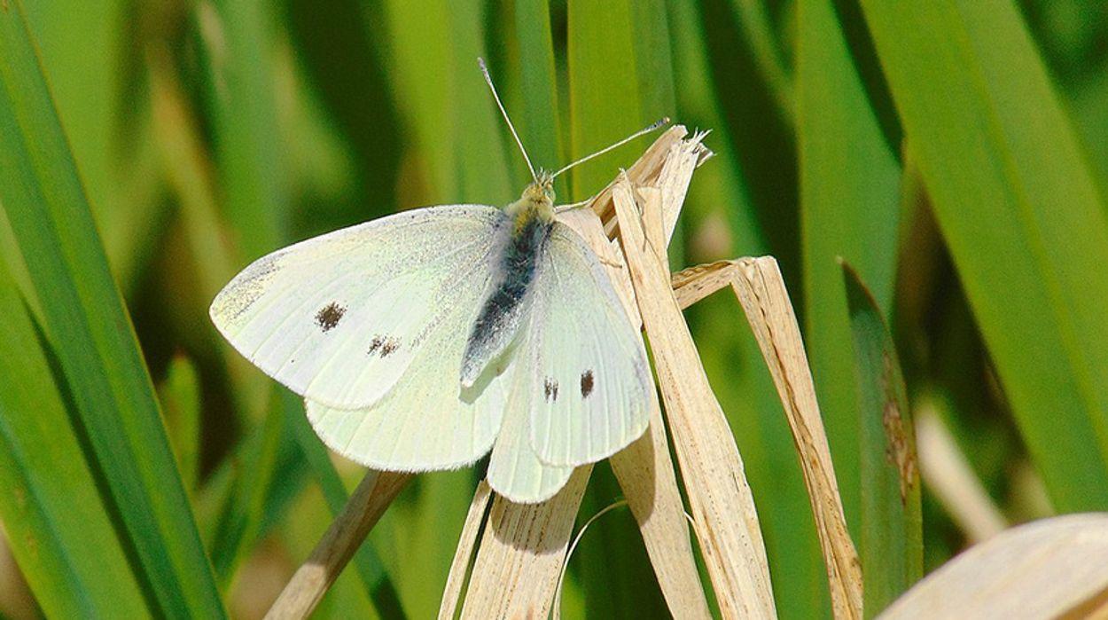 Afbeelding van Onderzoek naar afname insecten noodzakelijk