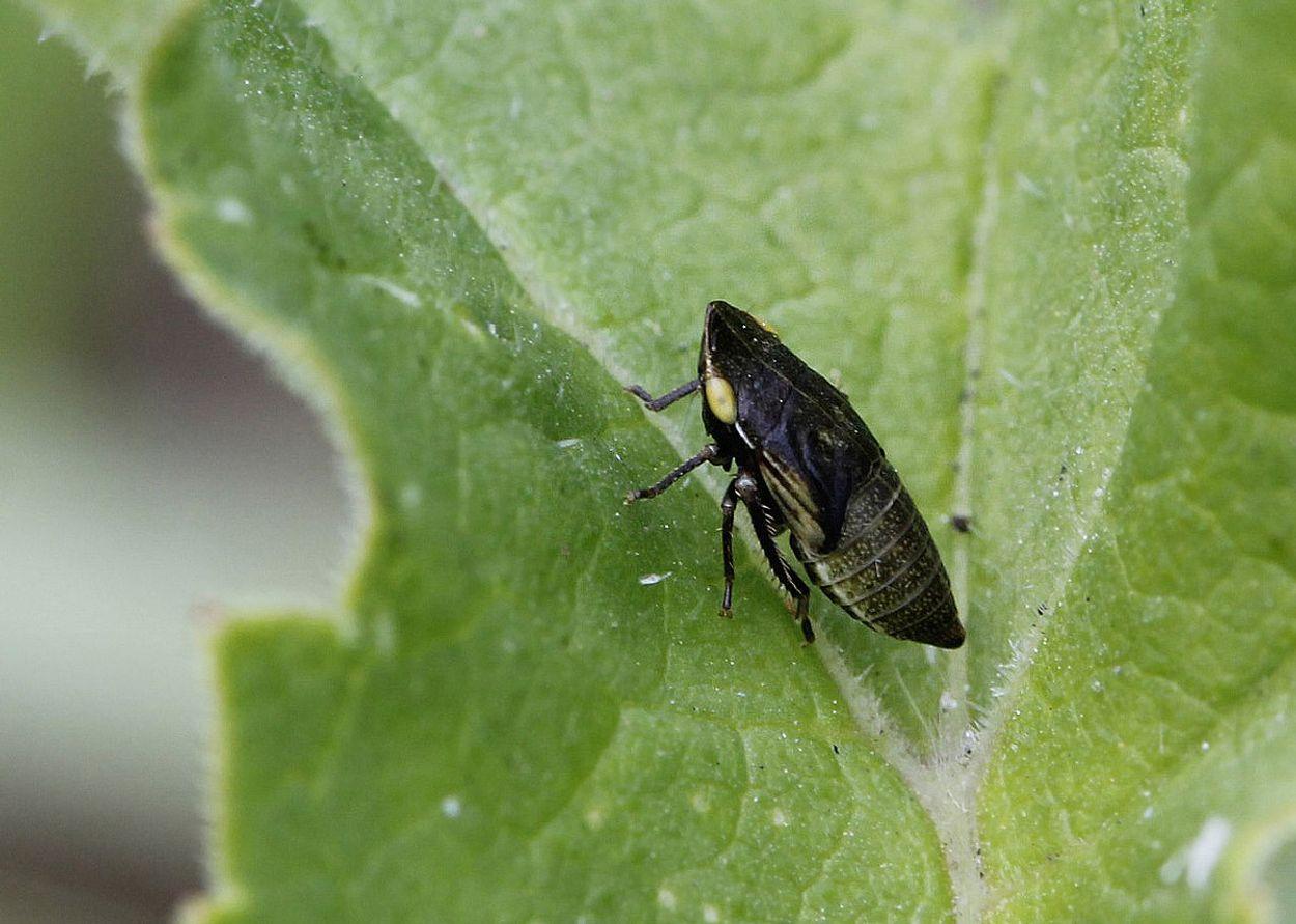 Afbeelding van 25ste jaarlijkse Cicaden bijeenkomst