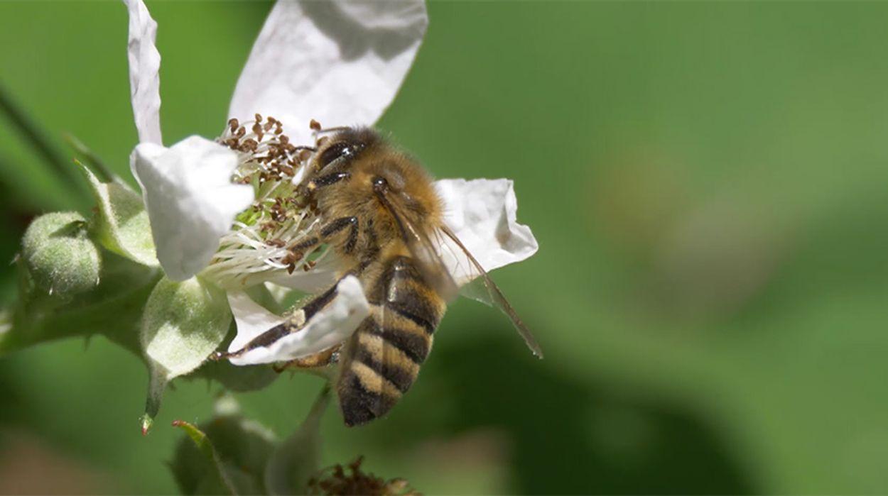 Afbeelding van Bijenbevruchtingsstation Vlieland
