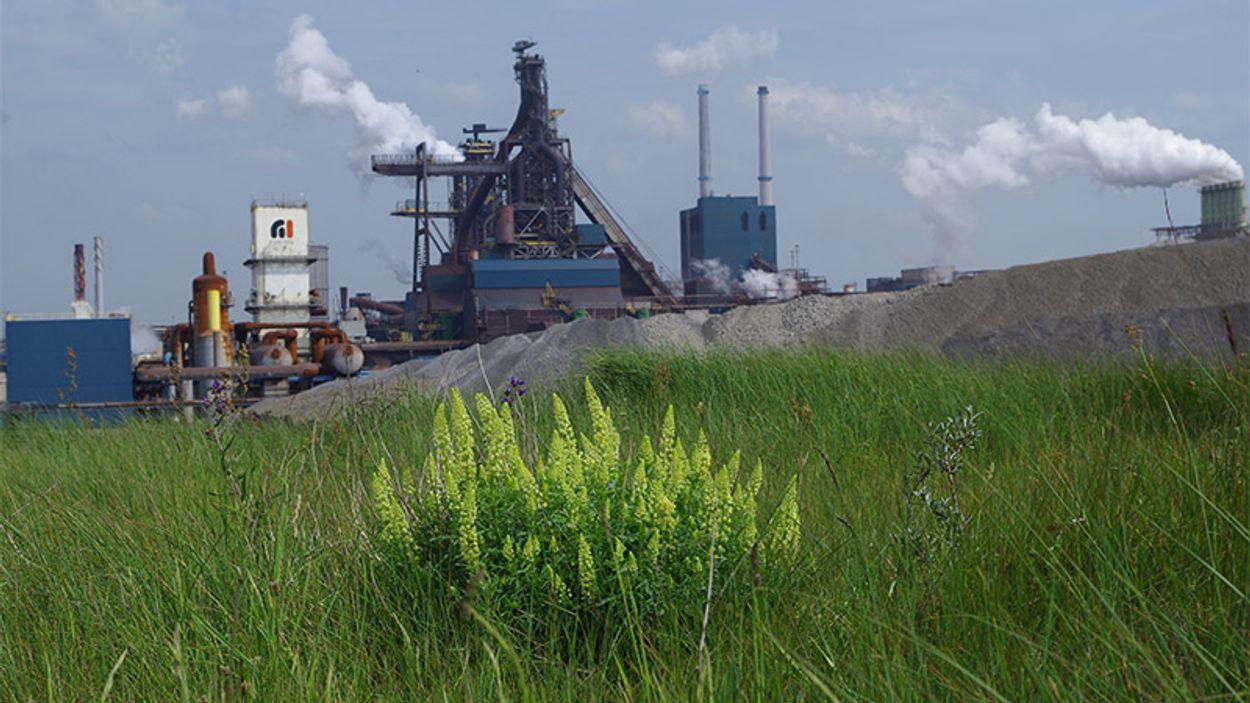 Afbeelding van Afvalberg Tata Steel ongemoeid door provincie