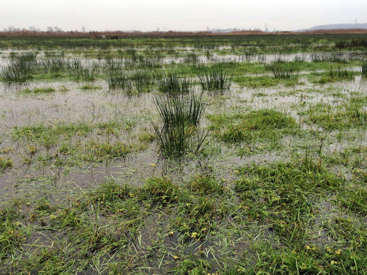 Afbeelding van Meer prioriteit nodig voor bescherming grondwater