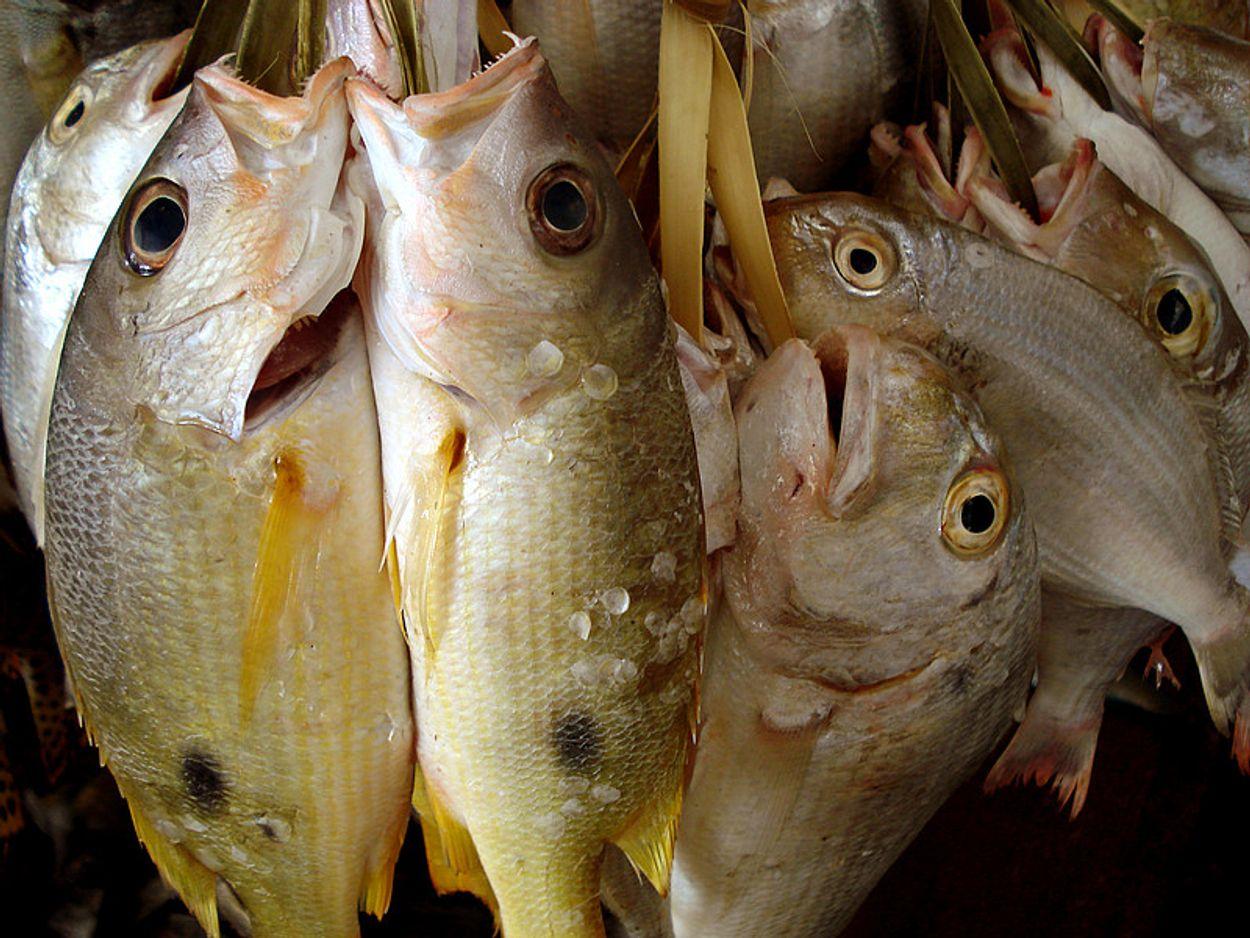 Afbeelding van Nieuwe visquota voor de Oostzee