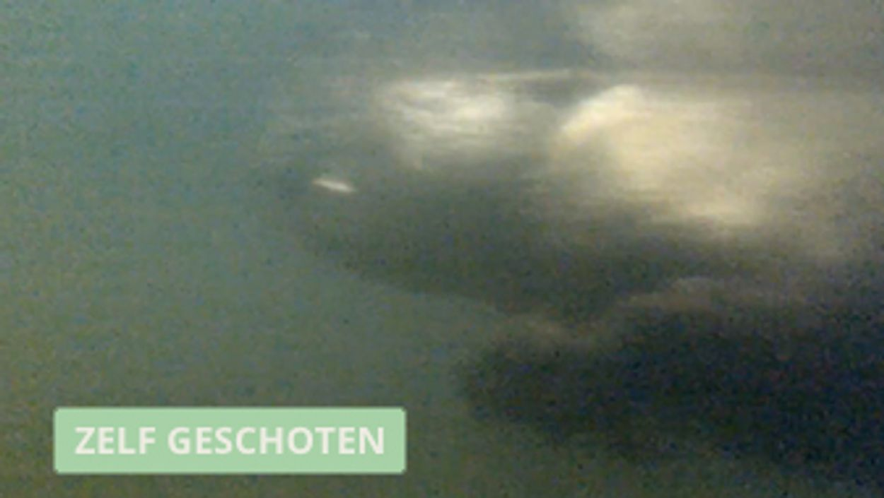 Afbeelding van Zwemmende bever