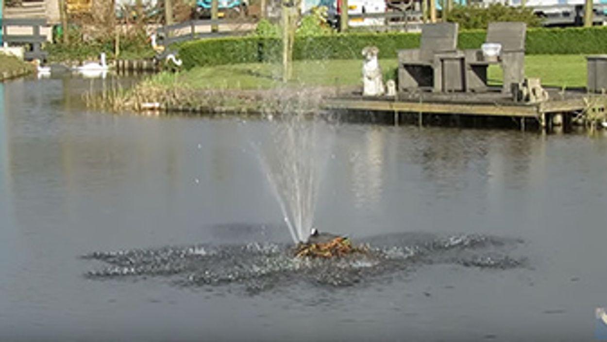 Afbeelding van Meerkoet broedt onder fontein