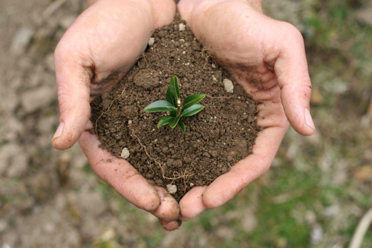 Afbeelding van Verscheidenheid plantensoorten maakt bodem sterk
