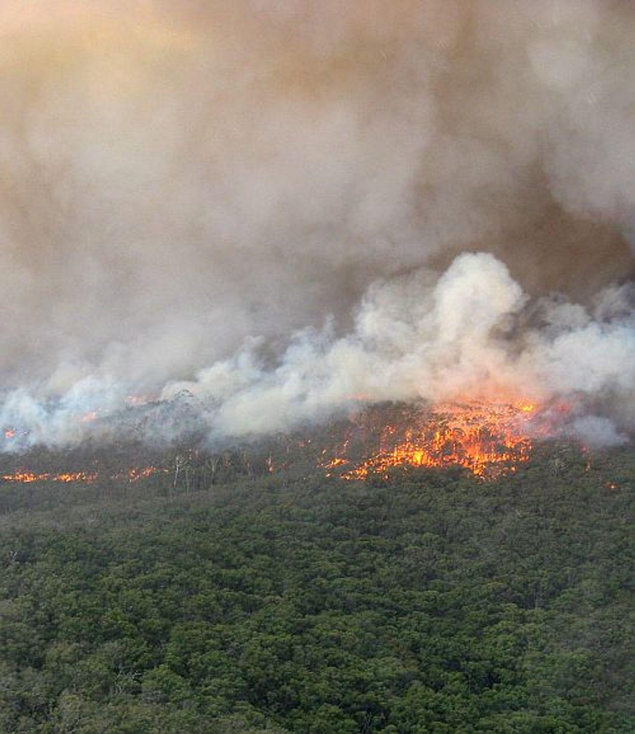 Afbeelding van 'Stop vernietiging bossen met Europese wet'