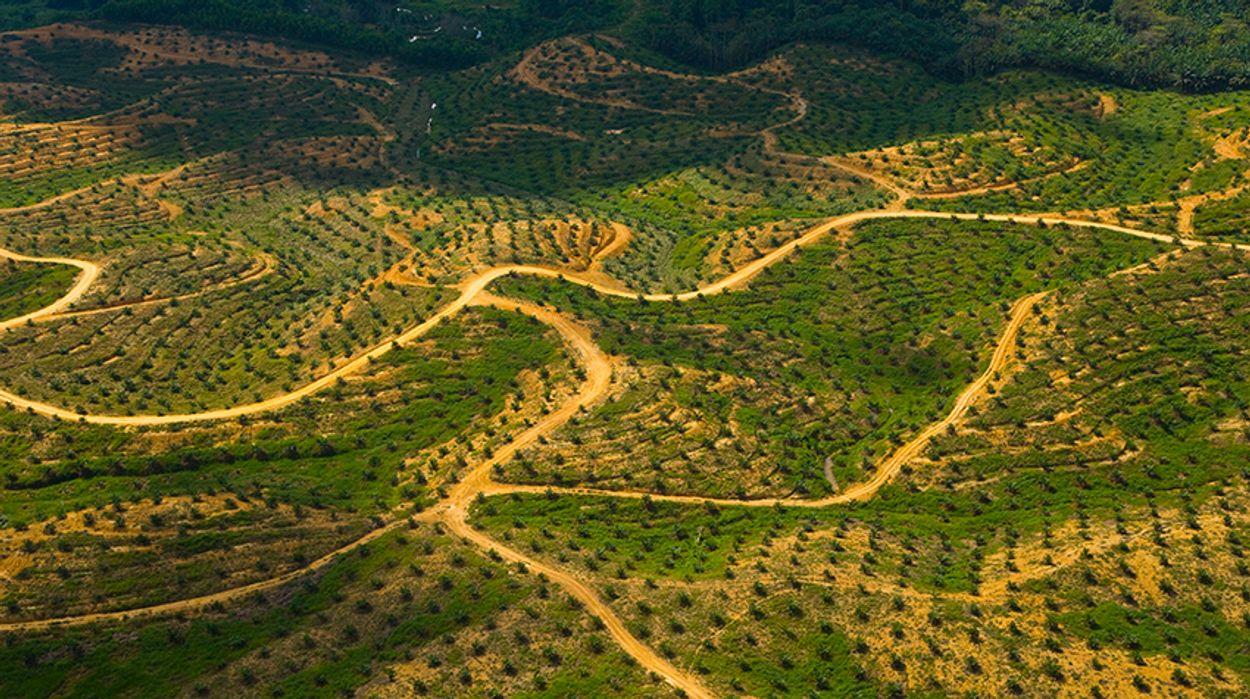 Palmolieplantage-Maleisie-_-naturepl.com--Juan-Carlos-Munoz--WWF