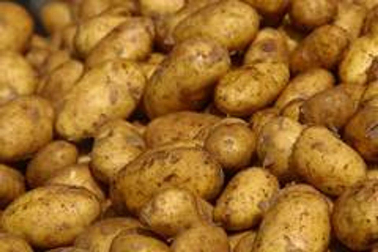Afbeelding van Telers spuiten koper op bio-aardappelen