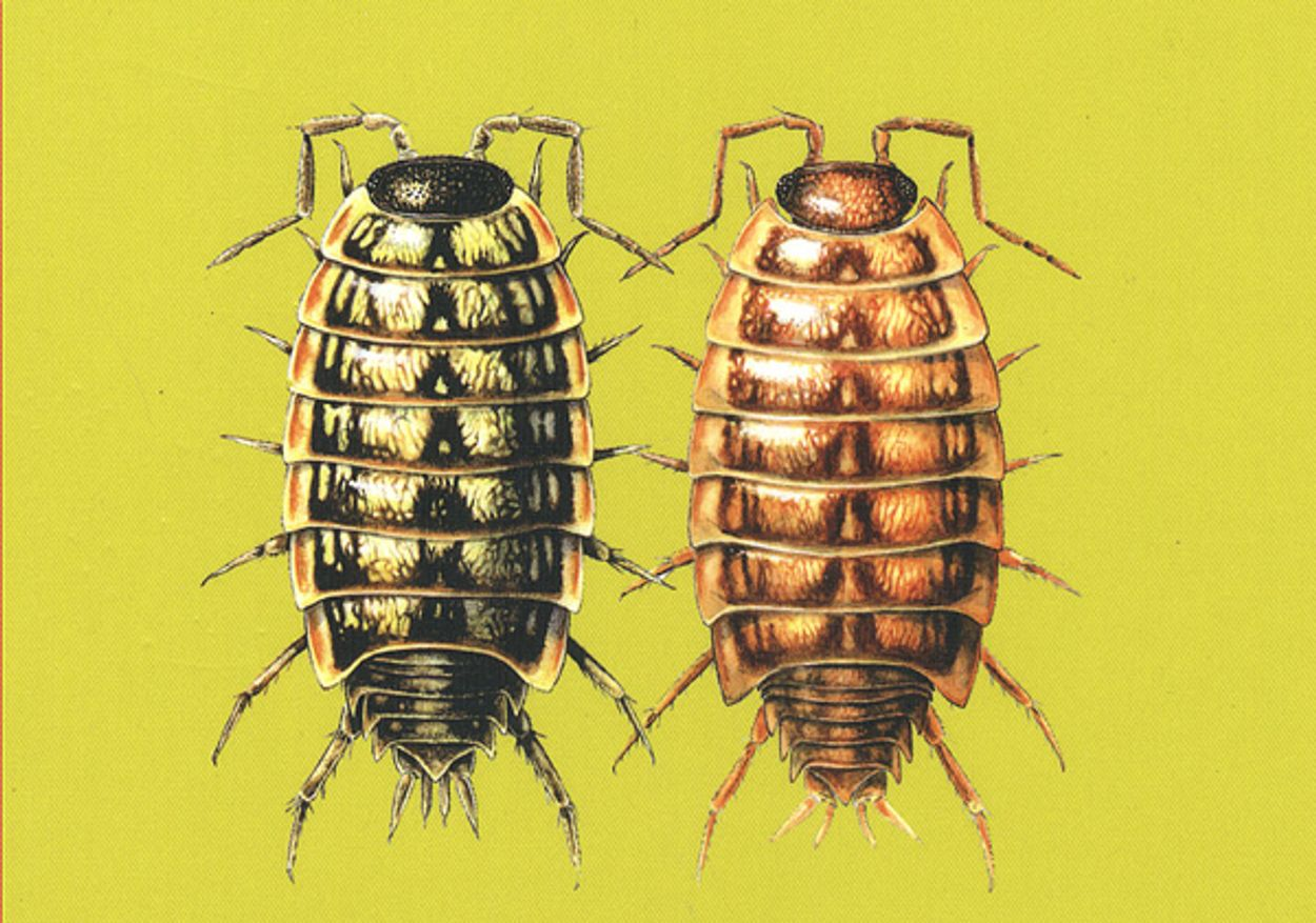 Afbeelding van Op zoek naar kleine 'bodemschatten' tijdens bodemdierendagen