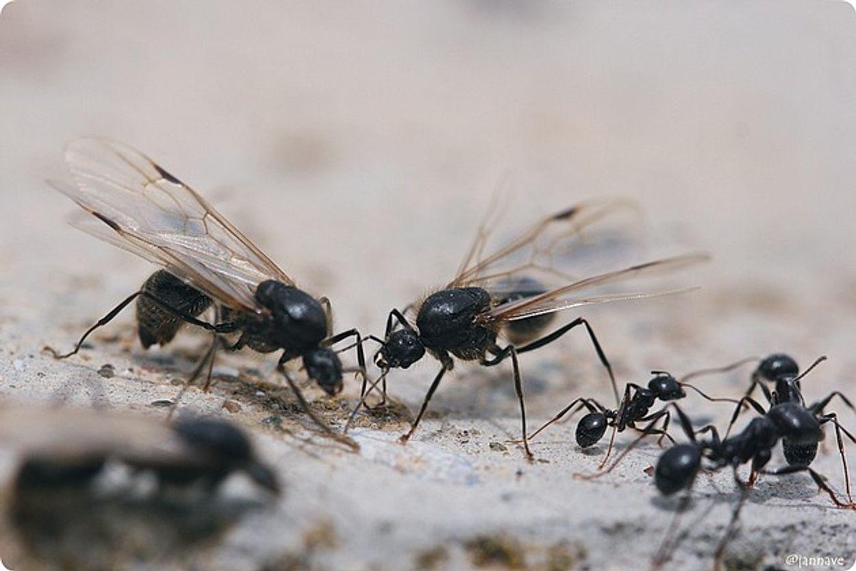 Afbeelding van Bodemtelling: meer mieren, minder slakken