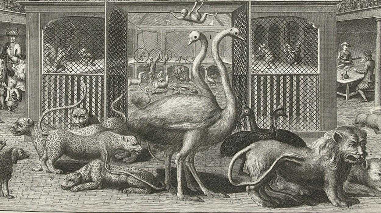 Afbeelding van Exotische dieren in historisch Amsterdam