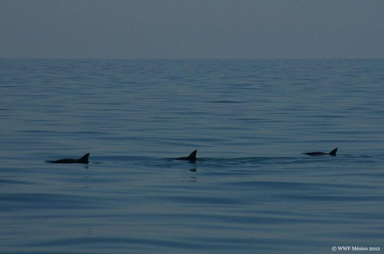 Afbeelding van Aantal zeezoogdieren voor Europese kust gelijk gebleven