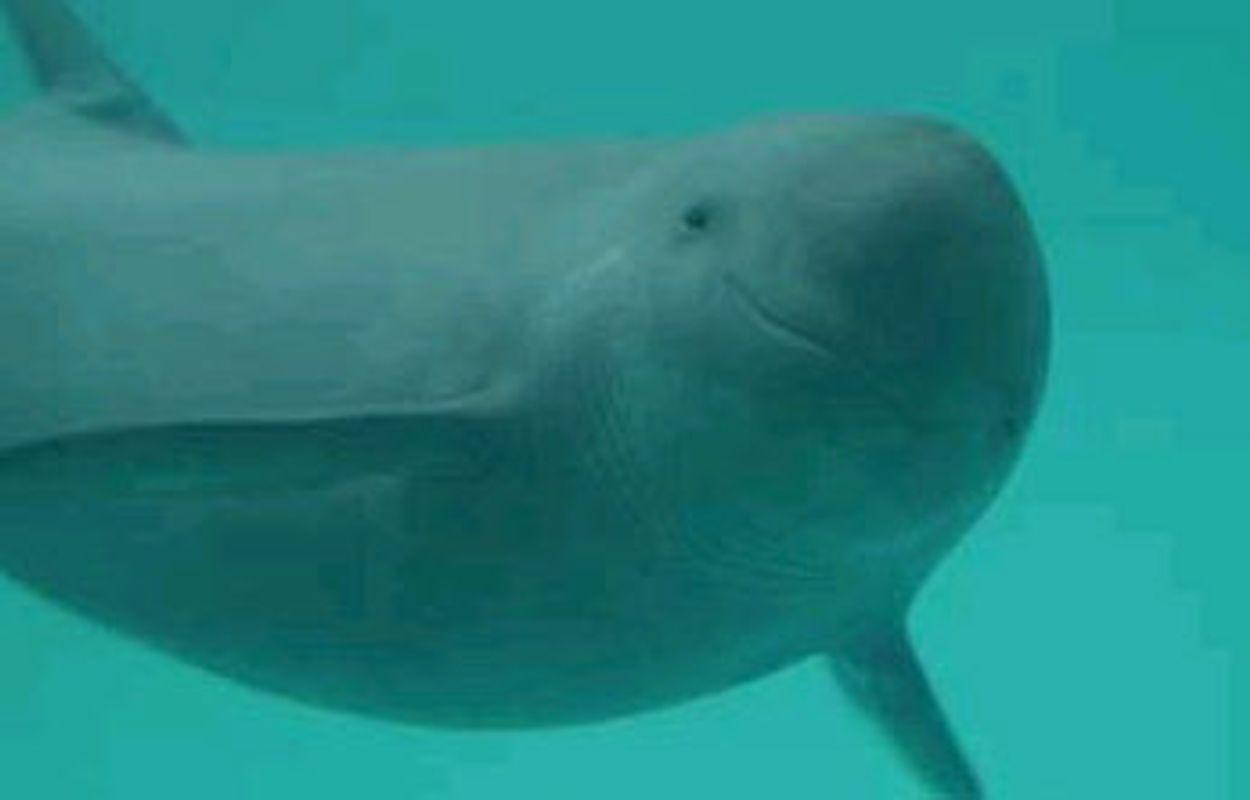 Afbeelding van 25 bruinvissen geteld in Oosterschelde