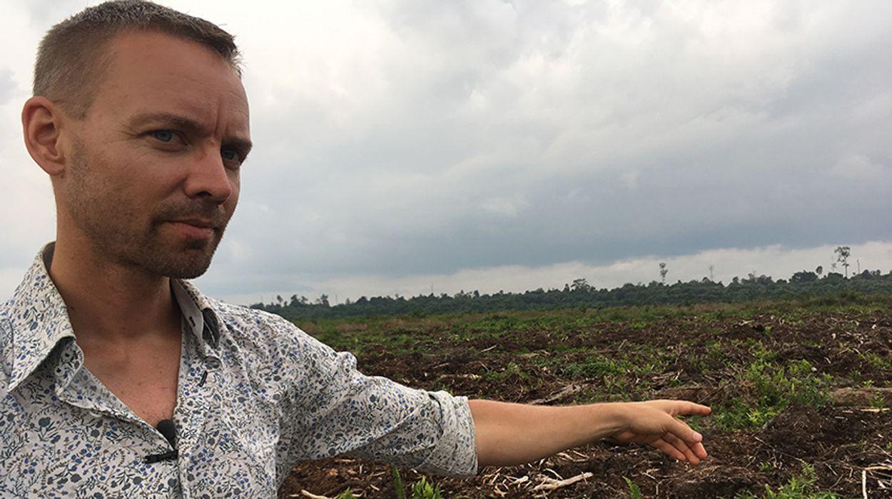Afbeelding van Europees Parlement stemt voor palmolieverbod in biobrandstof