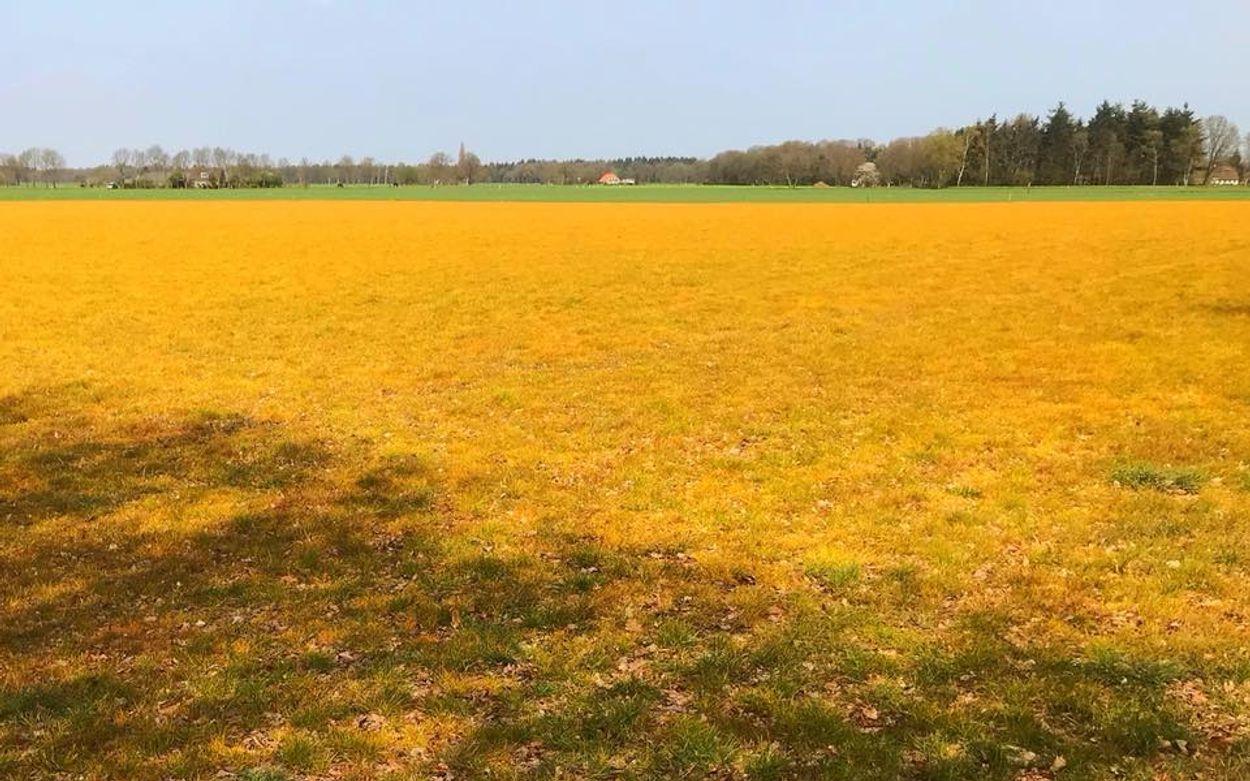 Afbeelding van Roundup kleurt landschap oranje
