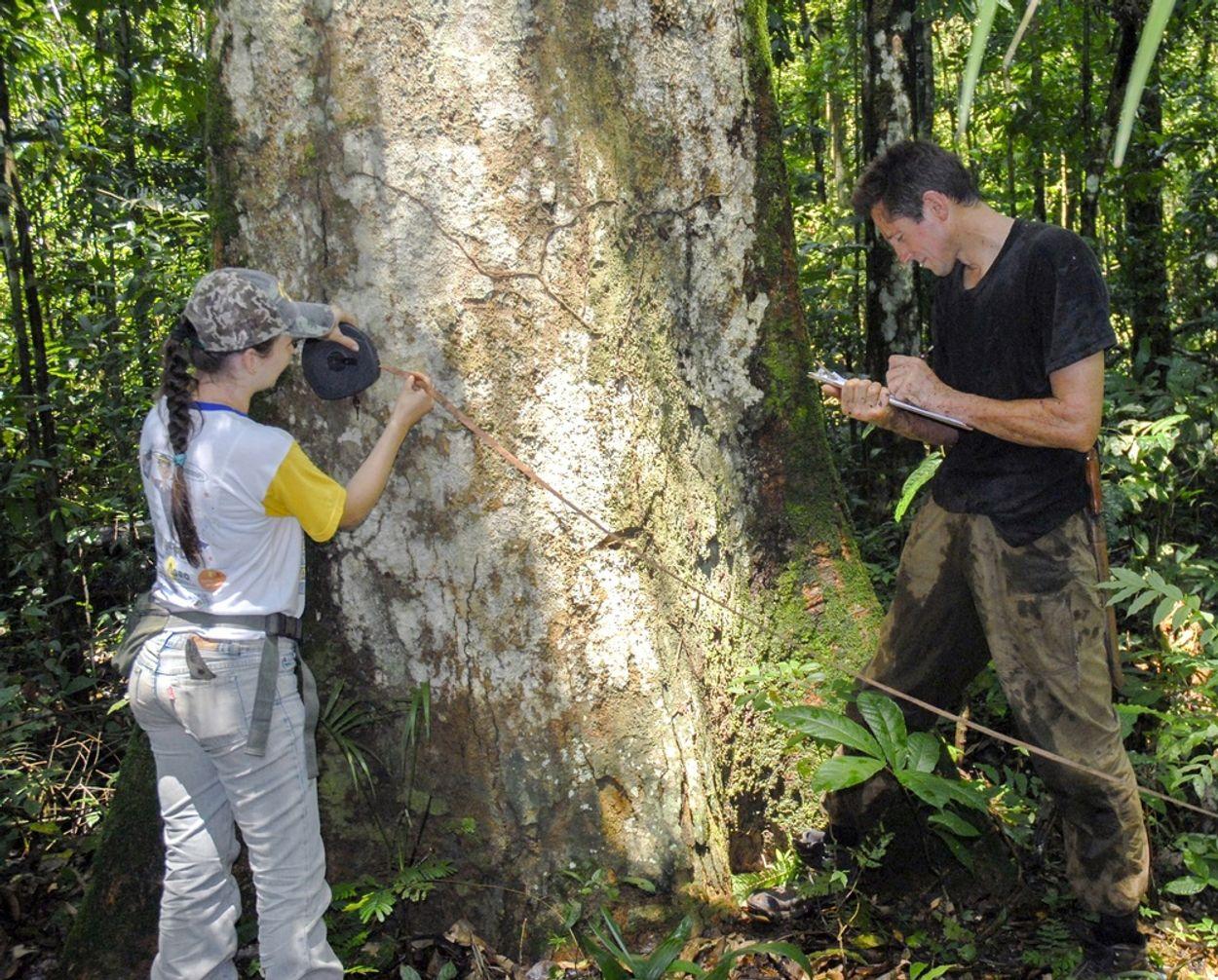 Afbeelding van Bomen tellen in de Amazone