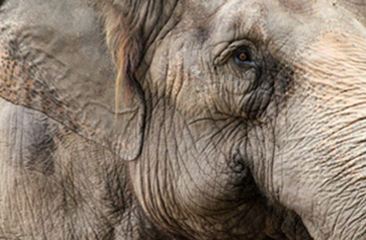 Afbeelding van Dierenrechtenorganisatie Bite Back roept bioscopen op om The Zookeeper niet te vertonen