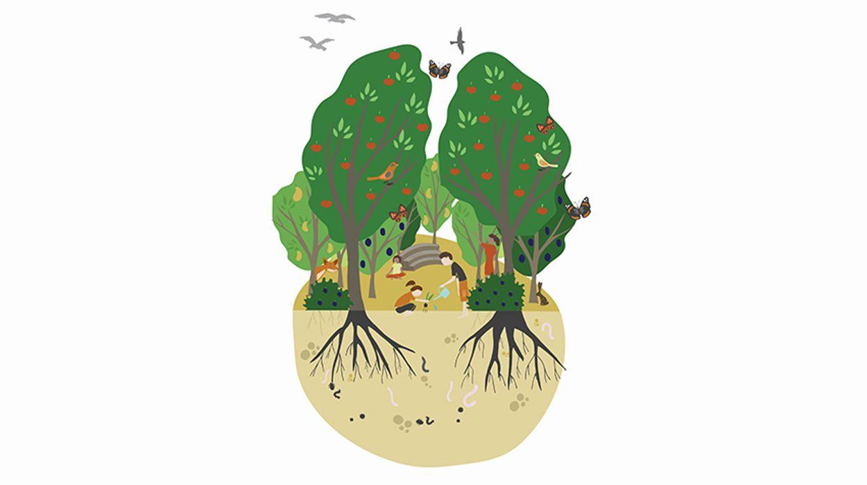 Afbeelding van Schoolplein in Ede krijgt eerste Tiny Food Forest van Nederland