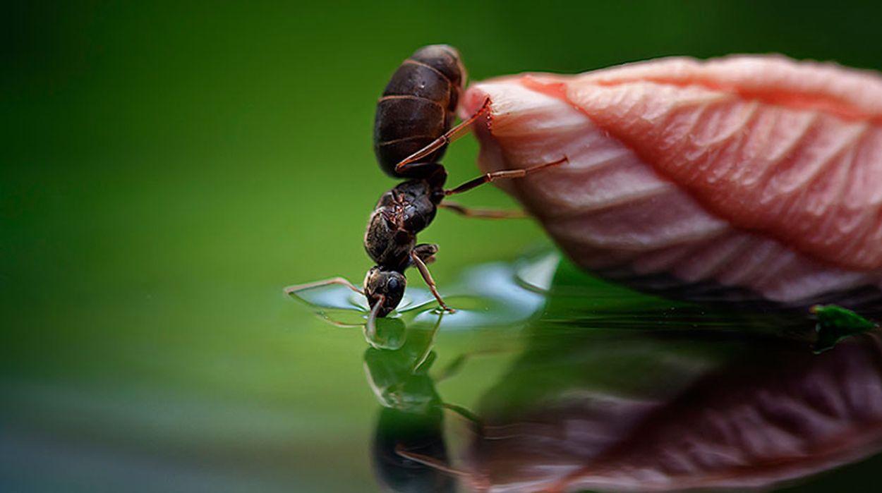 Afbeelding van Slimme mieren vervoeren honing